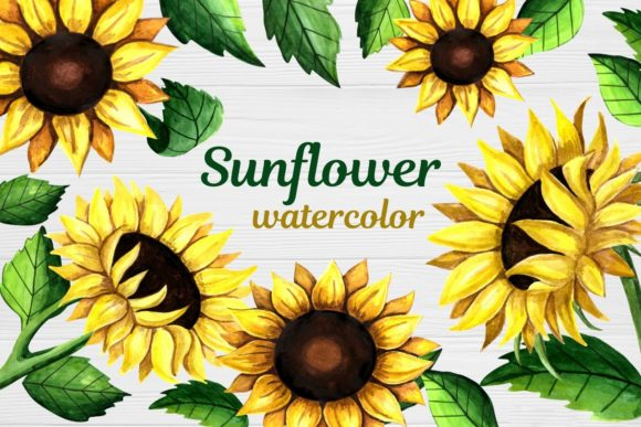 Print on Demand: Sunflower Clipart Watercolor Graphic Illustrations By  Magic world of design
