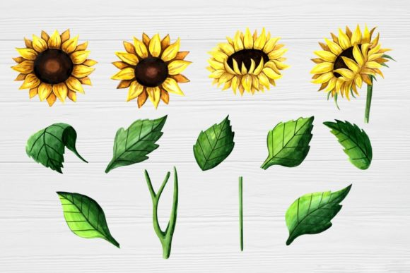 Print on Demand: Sunflower Clipart Watercolor Graphic Illustrations By  Magic world of design - Image 2