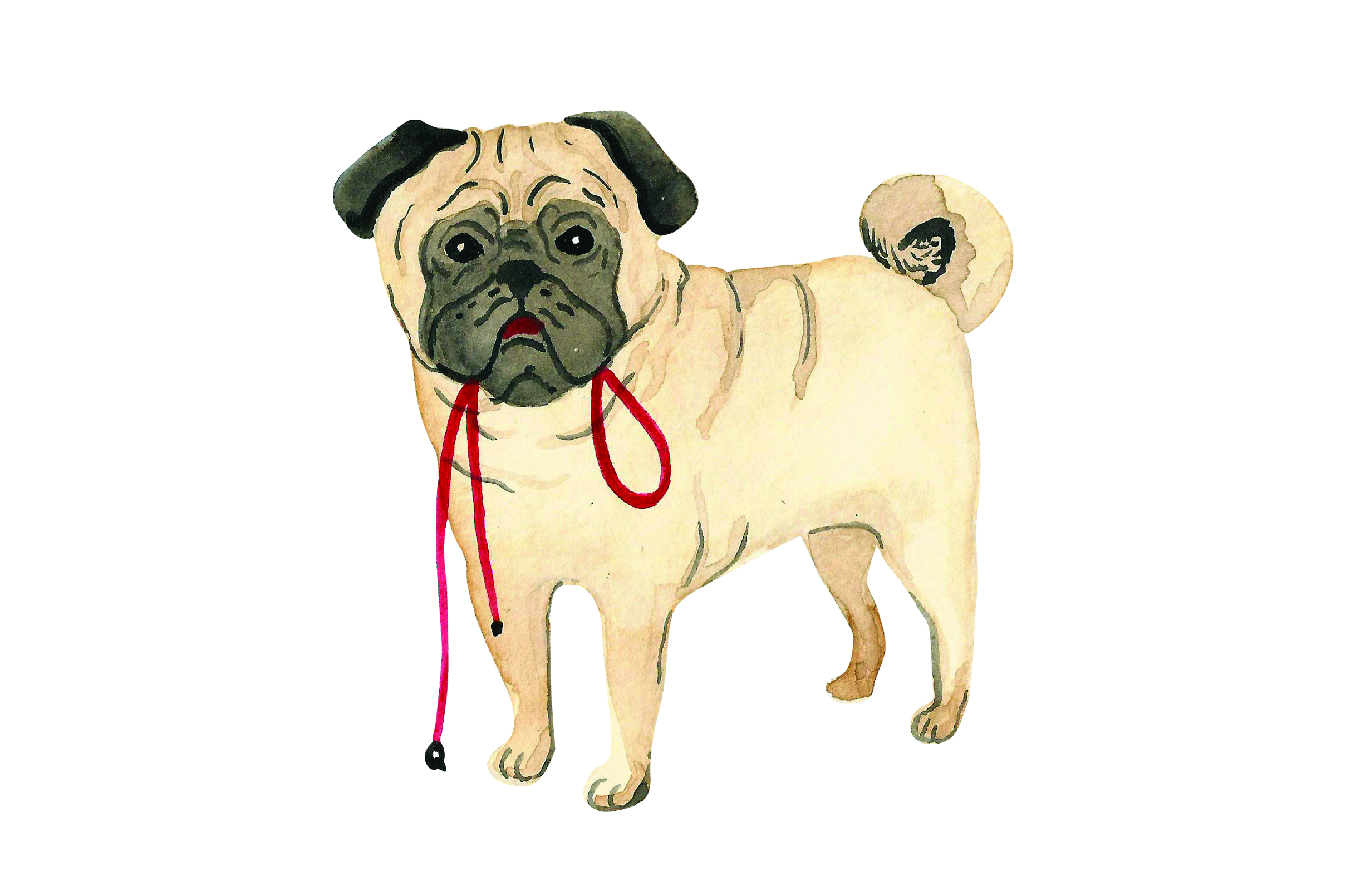 Download Free Pug With Leash In Mouth Svg Cut File By Creative Fabrica Crafts for Cricut Explore, Silhouette and other cutting machines.