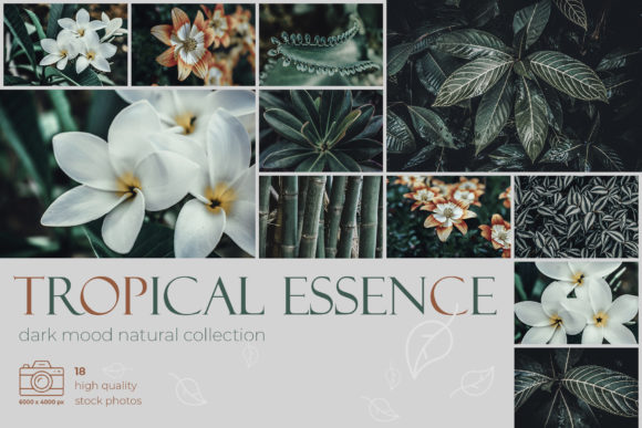 Download Free Tropical Essence Photo Bundle Graphic By Draw Wind Zen Creative Fabrica for Cricut Explore, Silhouette and other cutting machines.