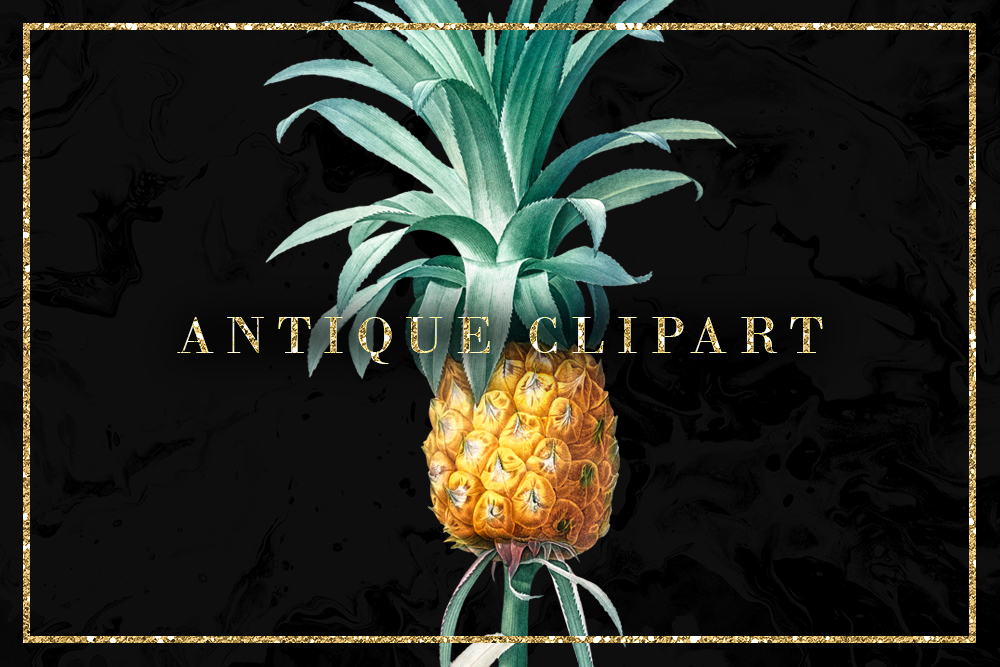 Download Free Pineapple Illustration Vintage Clipart Graphic By Sabina Leja for Cricut Explore, Silhouette and other cutting machines.