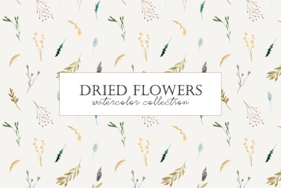 Dried Flowers. Watercolor Collection Graphic Objects By Slastick