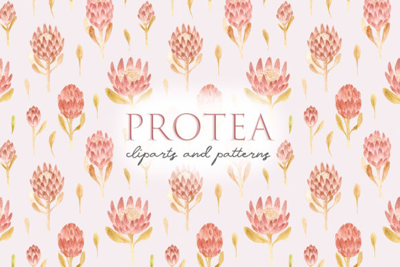 Download Free Watercolor Protea Flowers Pink Cliparts Graphic By Slastick for Cricut Explore, Silhouette and other cutting machines.