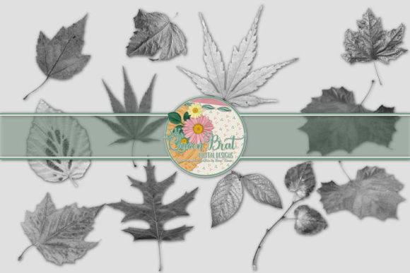 Download Free Autumn Leaves 2 Graphic By Queenbrat Digital Designs Creative Fabrica for Cricut Explore, Silhouette and other cutting machines.