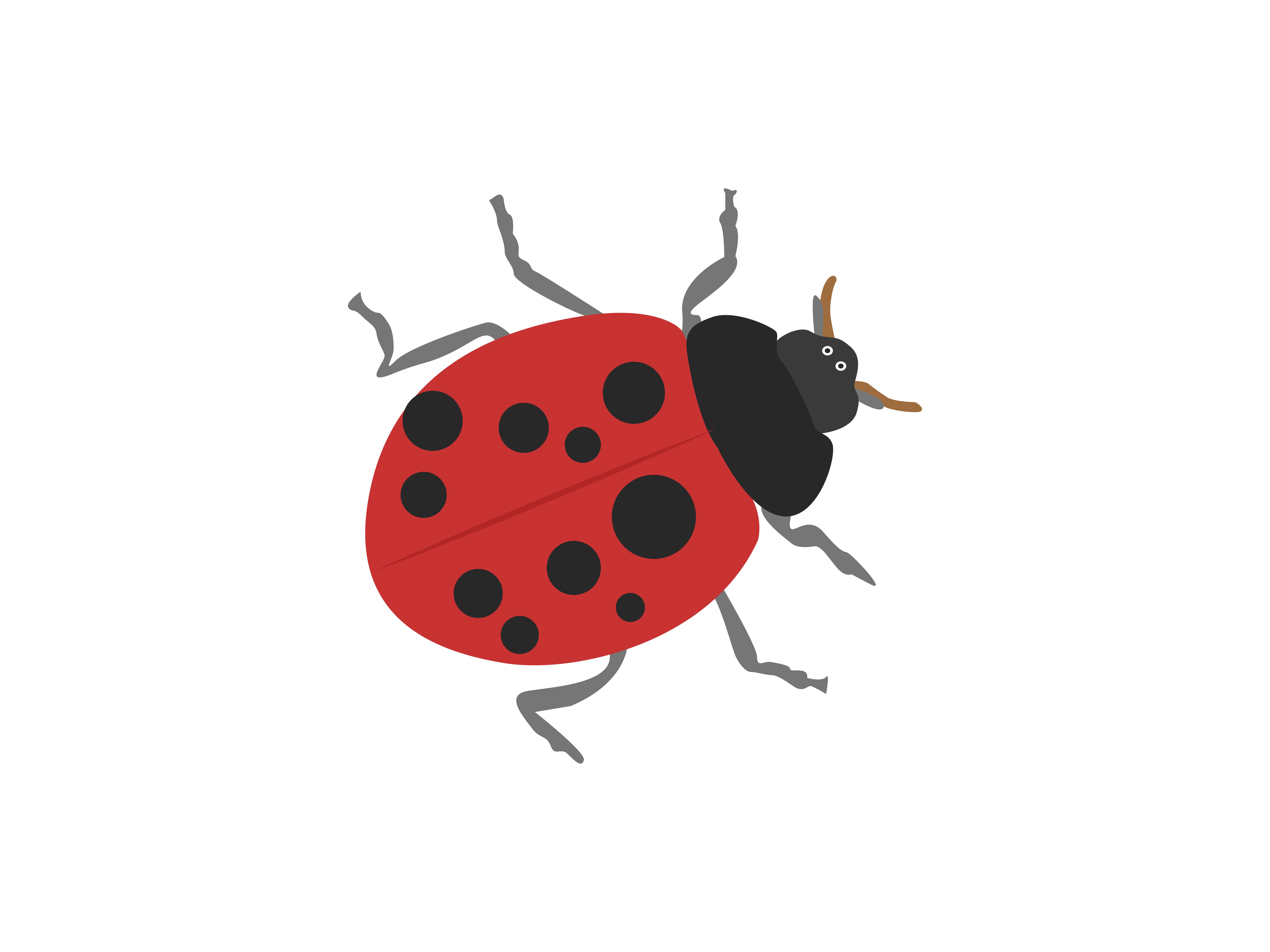 Download Free Coccinellidae Animal Graphic By Archshape Creative Fabrica for Cricut Explore, Silhouette and other cutting machines.