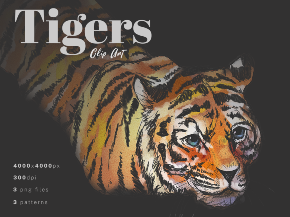 Print on Demand: Tigers Watercolor Clip Art + Patterns Graphic Illustrations By ralucasuciuart