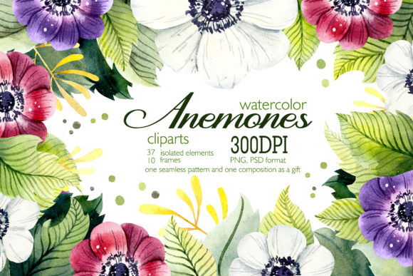 Watercolor Clipart Anemones Graphic Illustrations By Мария Кутузова