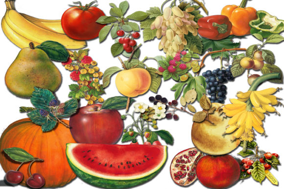 Print on Demand: Fruit Clip Art, Fruit Illustration Graphic Illustrations By retrowalldecor