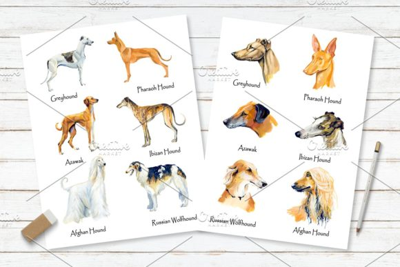 Hounds. Gouache Cliparts Graphic Illustrations By Мария Кутузова - Image 4