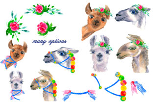 Print on Demand: Watercolor Lama Clipart Graphic Illustrations By ElenaZlataArt 2