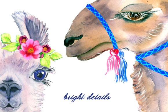 Watercolor Lama Clipart Graphic Illustrations By ElenaZlataArt - Image 4
