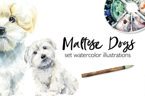 Watercolor Maltese Dog Graphic Illustrations By Мария Кутузова