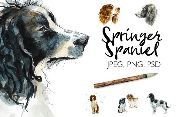 Watercolor Springer Spaniels Graphic Illustrations By Мария Кутузова