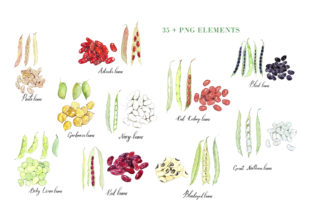 Watercolour Beans Illustration Graphic Illustrations By Primafox Design 7