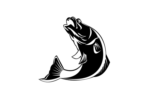 Download Free Barramundi Fish Jumping Up Isolated Graphic By Patrimonio for Cricut Explore, Silhouette and other cutting machines.