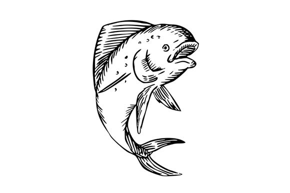 Download Free Mahi Mahi Dorado Dolphinfish Jumping Graphic By Patrimonio for Cricut Explore, Silhouette and other cutting machines.