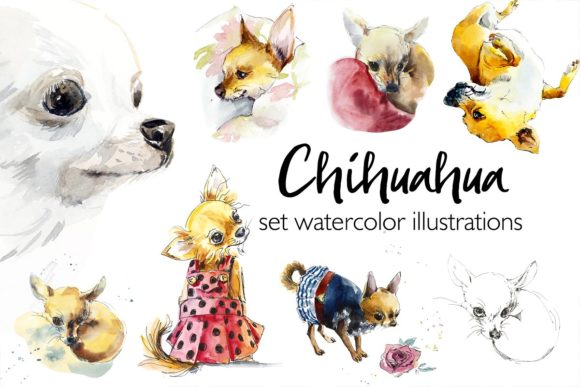 Watercolor Set. Chihuahua Graphic Illustrations By Мария Кутузова