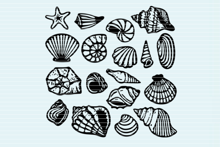 Download Free File Shells For Cutting Graphic By Seehas Design Creative for Cricut Explore, Silhouette and other cutting machines.