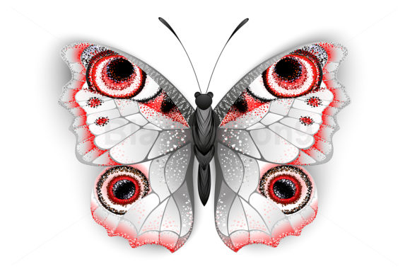 Gray Butterfly Peacock Eye Graphic Illustrations By Blackmoon9