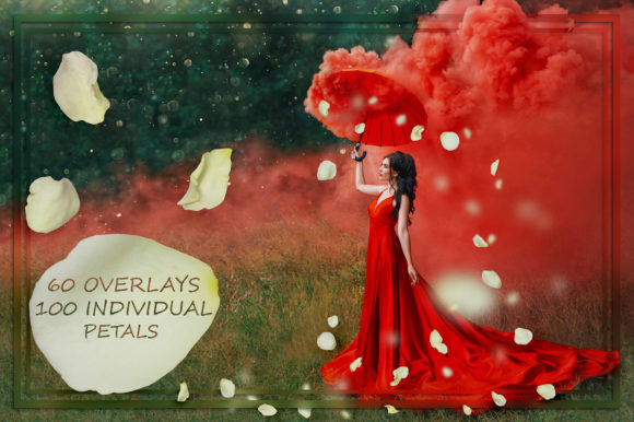 White Rose Petals Overlays Graphic Nature By FaeryDesign