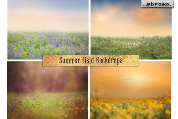 Print on Demand: Summer Field Backdrops Graphic Layer Styles By MixPixBox