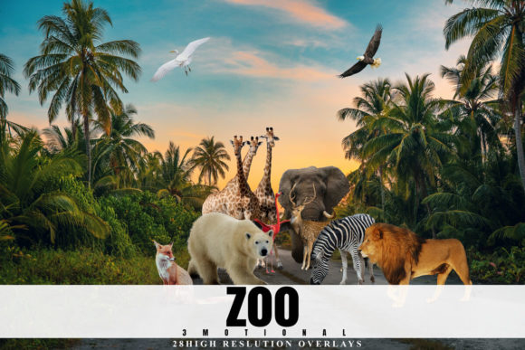 Print on Demand: 28 Zoo Overlays, Realistic Wild Animal Graphic Backgrounds By 3Motional