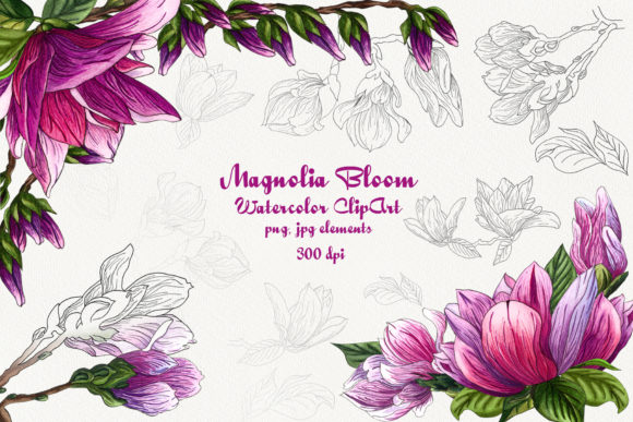 Magnolia Bloom Watercolor Clip Art Graphic Illustrations By BarvArt