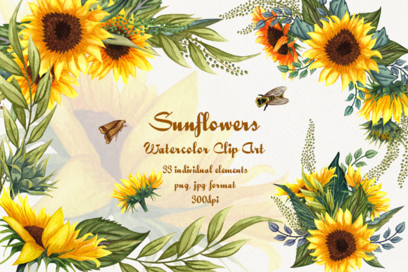 Sunflowers Watercolor Clip Art Graphic Illustrations By BarvArt