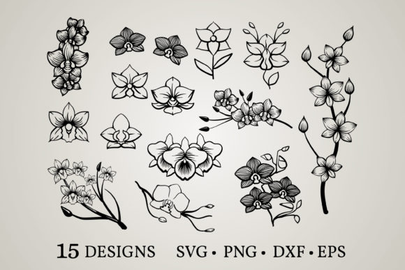 Download Free 1 Orchid Flower Svg Designs Graphics for Cricut Explore, Silhouette and other cutting machines.