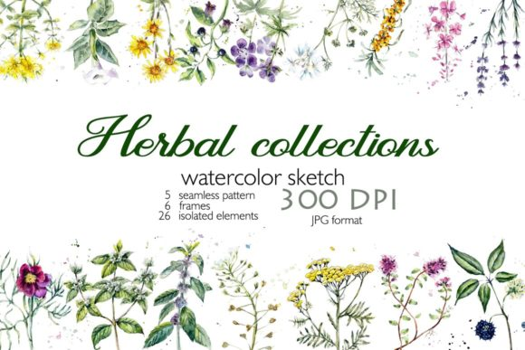 Collection Herb Graphic Illustrations By Мария Кутузова