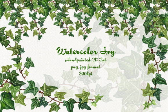 Ivy Watercolor Clip Art Graphic Illustrations By BarvArt