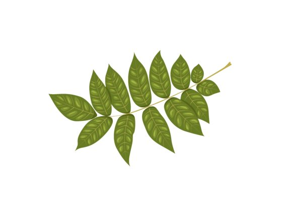 Download Free Ash Leaf Vector Illustration Graphic By Purplebubble Creative for Cricut Explore, Silhouette and other cutting machines.