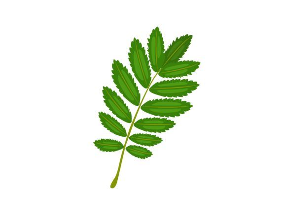 Download Free Rowan Leaf Vector Illustration Graphic By Purplebubble for Cricut Explore, Silhouette and other cutting machines.