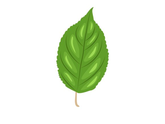 Download Free Gongronema Latifolium Leaf Graphic By Purplebubble Creative SVG Cut Files