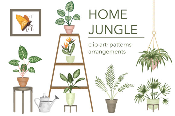 Home Jungle Graphic Illustrations By lexiclaus