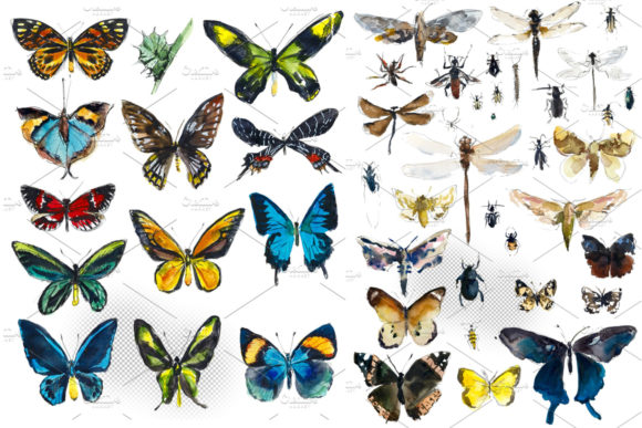 Download Free Watercolor Butterflies And Insects Graphic By Mariya Kutuzova SVG Cut Files