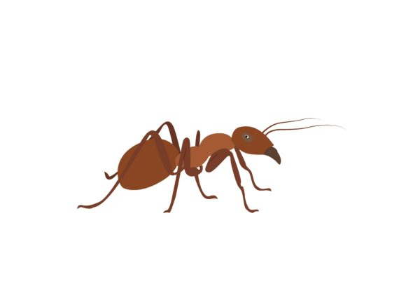 Download Free Red Ant Animal Graphic By Archshape Creative Fabrica for Cricut Explore, Silhouette and other cutting machines.
