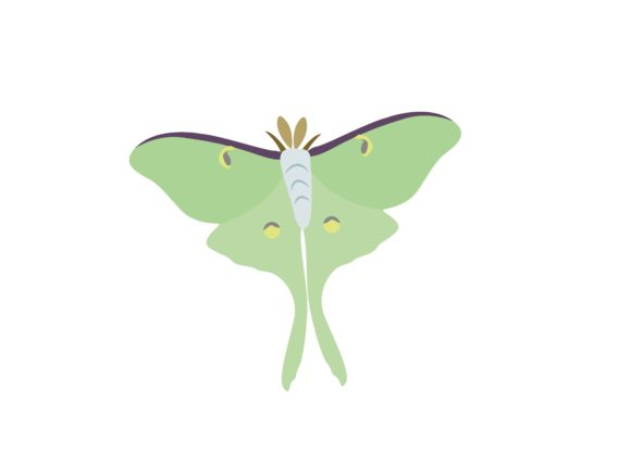 Download Free Green Swalowtail Butterfly Animal Graphic By Archshape for Cricut Explore, Silhouette and other cutting machines.
