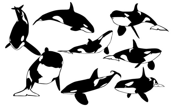Print on Demand: Orca Whale Vector Bundle Graphic Crafts By Arief Sapta Adjie