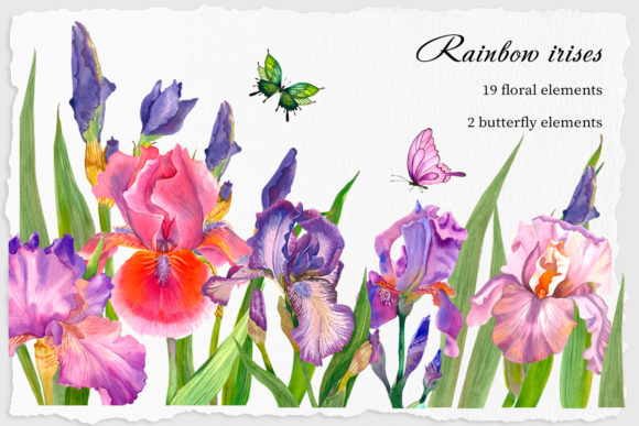 Irises Watercolor Clipart Flower Graphic Illustrations By ElenaZlataArt