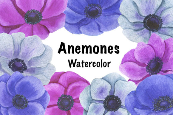 Collection Anemones Flowers Watercolor Graphic Illustrations By shishkovaiv