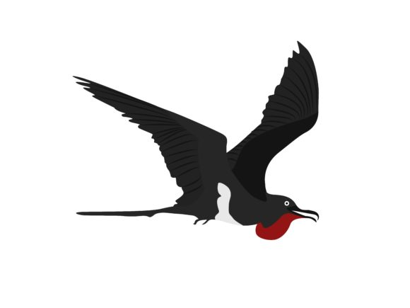 Download Free Frigatebirds Animal Graphic By Archshape Creative Fabrica for Cricut Explore, Silhouette and other cutting machines.