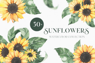 Watercolor Sunflowers Collection Graphic Illustrations By Madiwaso