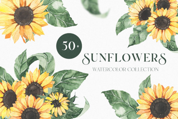 Watercolor Sunflowers Collection Gráfico Ilustraciones Por Madiwaso
