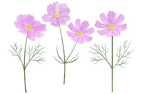 Download Free Collection Of Illustrations Cosmea Flower Graphic By Shishkovaiv for Cricut Explore, Silhouette and other cutting machines.