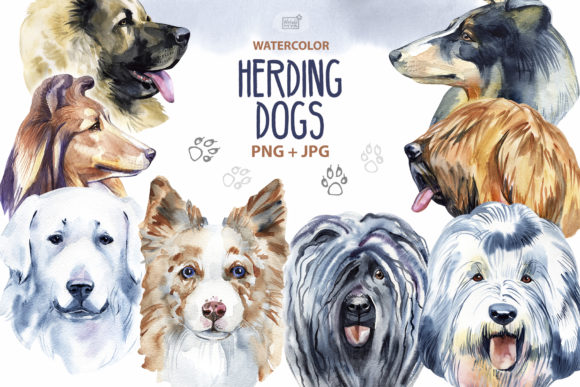 Download Free Watercolor Herding Dogs Graphic By Natalimyastore Creative Fabrica for Cricut Explore, Silhouette and other cutting machines.