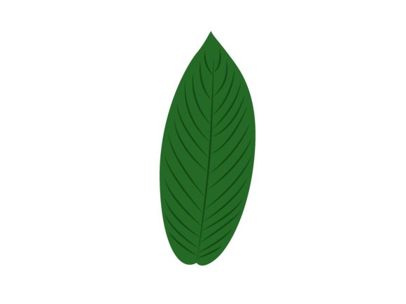 Download Free Baccaurea Motleyana Leaf Graphic By Purplebubble Creative Fabrica for Cricut Explore, Silhouette and other cutting machines.