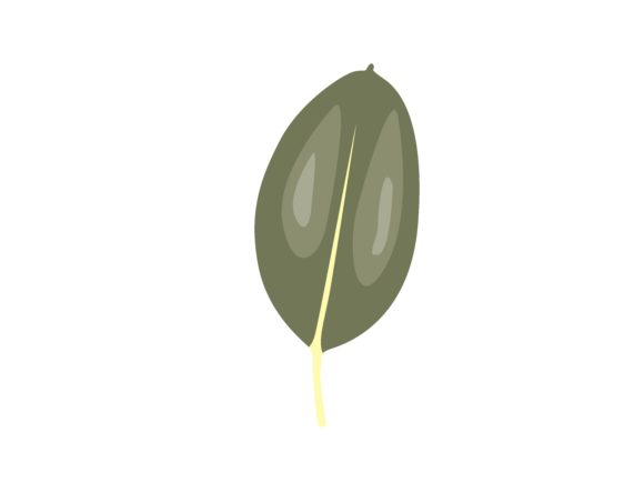 Download Free Ficus Elastica Leaf Graphic By Purplebubble Creative Fabrica for Cricut Explore, Silhouette and other cutting machines.