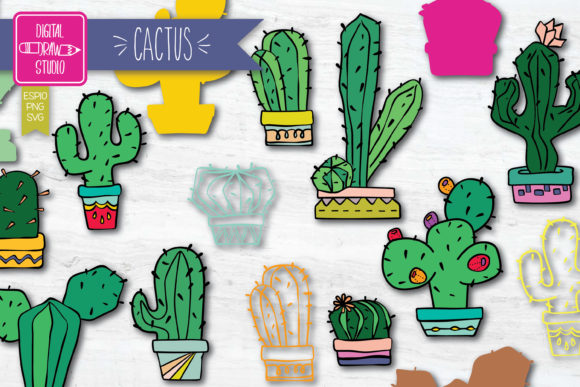 Hand Drawn Cactus Colored | House Plants Graphic Illustrations By Digital_Draw_Studio