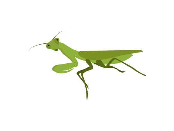 Download Free Praying Mantis Insect Animal Graphic By Archshape Creative Fabrica for Cricut Explore, Silhouette and other cutting machines.